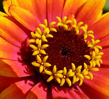 Flowers in a Flower by Luann Gingras