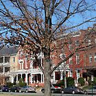 A Tree Grows In Richmond by Kimberly Miller