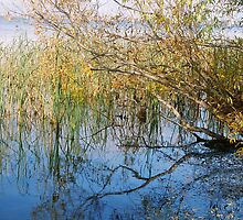 Lake Mulwala Victoria by cahinds