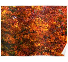 Autumn tones of a Japanese Maple #2 Poster