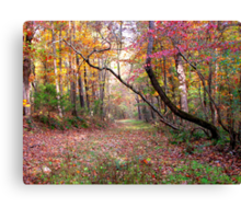 Forest Path,  Arkansas Ozark Mountains Canvas Print