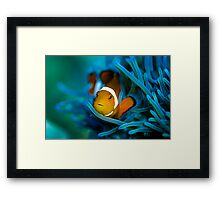 Clown at Fisherman's Wharf Framed Print