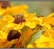 Bee Love Affair by Cherubtree