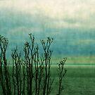 Beyond the shore by Anne Staub