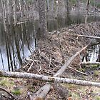 Beaver dam by JohnEvans