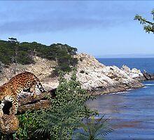 994_Gabon Seashore by George W Banks
