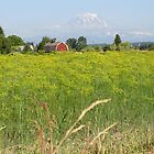 PUYALLUP VALLEY DILL FIELD by MsLiz