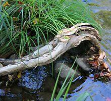 Driftwood Arm by ephotodesigner