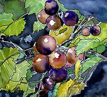 grape vine still life fruit by derekmccrea
