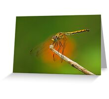DFly Greeting Card
