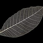 Transparent Leaf by Marguerite Foxon