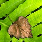 Old and New Leaf Abstract Art by Christina Rollo