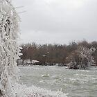 Shivering Cold by Carol Barona