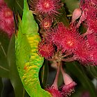 Green and Pink by Gethin