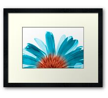 Blue Gerber Framed Print