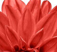 Red Petals by SpikeFlutie