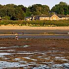 Bait Digging At Bembridge by Rod Johnson