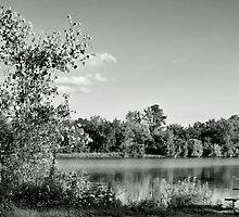 Heron Lake by Gaby Swanson  Photography
