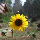 A sunny day by Cory Salazar