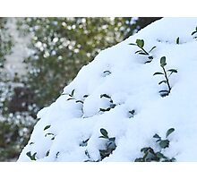 Life From Snow  Photographic Print