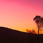 Sunset Over Yappala Station Hawker South Australia by marvynmc