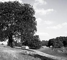Dyrham Park - Landscape #2 by Laurie Sinnett