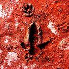 Emu Dingo Footprints by marvynmc