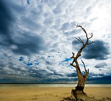 Murray River   Sth Australia by ╰⊰✿Sue✿⊱╮ Nueckel