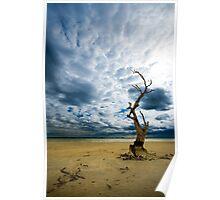Murray River   Sth Australia Poster