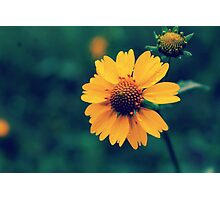 Rainy Daisy Photographic Print