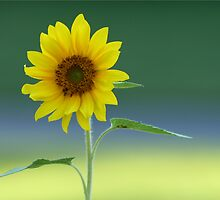 SUNFLOWER by Lori Deiter
