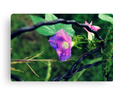 Flowers on a Fence Canvas Print