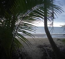 Wonga Beach, North Queensland by wpcrighton
