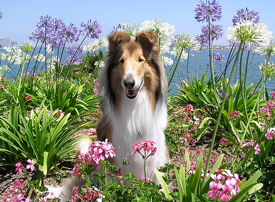 Collie Flowers - Happy Spring! by Jan  Wall
