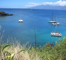 Seascape in Hawai by dolphin