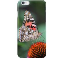Painted Lady Butterfly on Echinacea iPhone Case/Skin