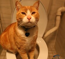 Toilet Trained Cat by styles