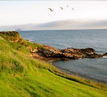 Cliff Face at Dunbar, Scotland by Roderick MacLeod