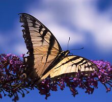 Wings of a Butterfly by cherylc1
