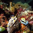 Two Nudibranchs Macro by Kristin Nichole Hamm