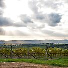 Yarra Valley Vineyard by Nolesy