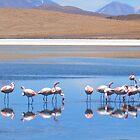 Flamingoes in the Volcanic Salar Laguanas by Honor Kyne