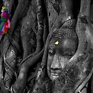 Buddha and Fig Tree by Caroline Fournier