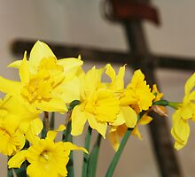 Blessed Daffodils  by taterbug