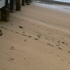 pier footsteps by aylah01