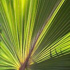 Fan Palm by kauaichelle