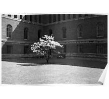 University Library Magnolia 1960 Poster