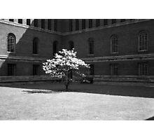 University Library Magnolia 1960 Photographic Print