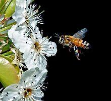 Pollenator by Steven  Agius