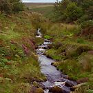 Ousegill Beck - North York Moors by Trevor Kersley